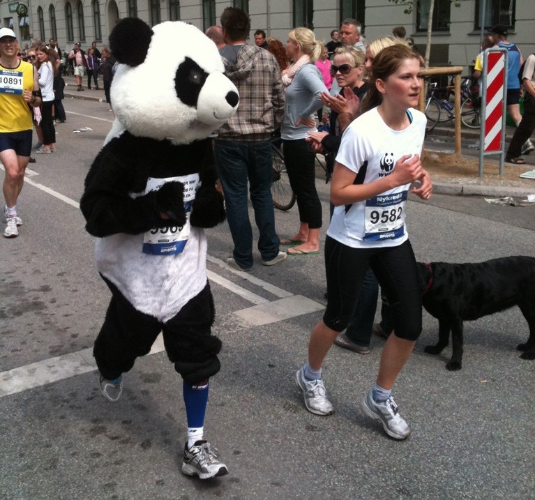 Kort før mål. Det kan godt være pandaen smiler, men det gør manden inden i ikke længere. Foto: Thorlak Fink.