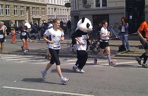 Efterhånden som løbet skred frem, blev der bedre plads, så jeg kunne løbe næsten uden føring. Foto: Nils Rydh.